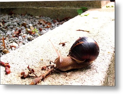 Escargot Metal Print