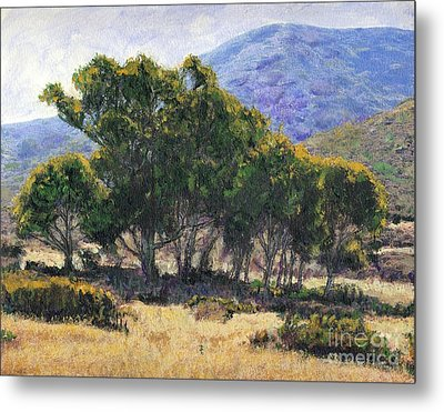 Eucalyptus Grove Catalina  Metal Print by Randy Sprout