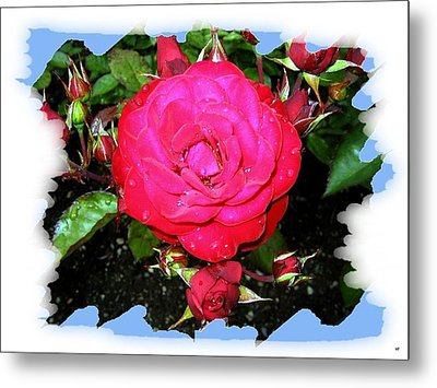 Europeana Roses And Raindrops Metal Print by Will Borden