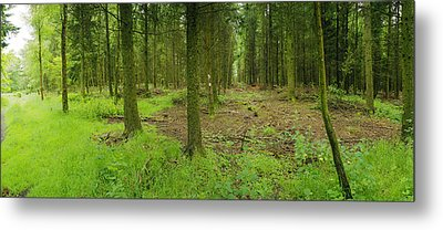 Exmoor Forest Metal Print
