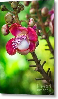 Exotic Cannonball Flower Metal Print by Melle Varoy