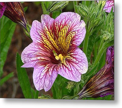 Metal Print featuring the photograph Exploding Beauty by Wendy McKennon