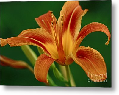 Expression Of Joy Metal Print by Inspired Nature Photography Fine Art Photography