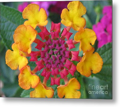 Extraordinary Photography Metal Print by Tina Marie