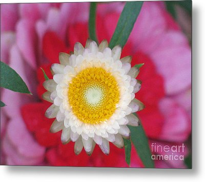 Metal Print featuring the photograph Eye Candy Photography by Tina Marie