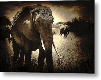 Eye Catching Moments Metal Print by Jess Easter