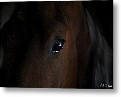 Eye Of The Beholder Metal Print
