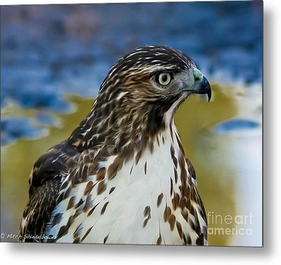 Metal Print featuring the photograph Eye Of The Hawk by Mitch Shindelbower