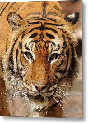 Metal Print featuring the photograph Eye Of The Tiger by Renee Hardison