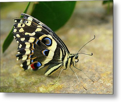Metal Print featuring the photograph Eye To Eye With A Butterfly by Laurel Talabere