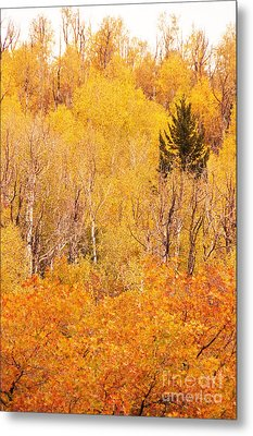 Eyeful Of Color Metal Print by Bob and Nancy Kendrick