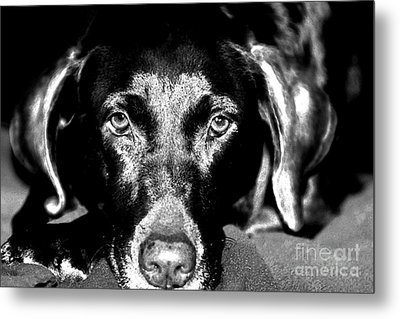 Metal Print featuring the photograph Eyes by Leslie Leda