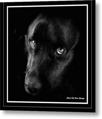 Eyes Of His Heart Metal Print by Sherri's Of Palm Springs