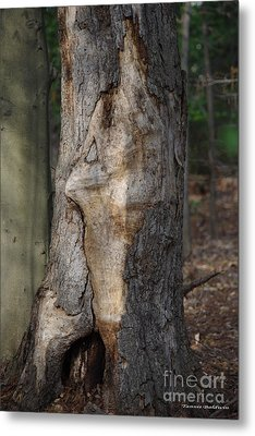 Metal Print featuring the photograph Face In The Tree by Tannis  Baldwin