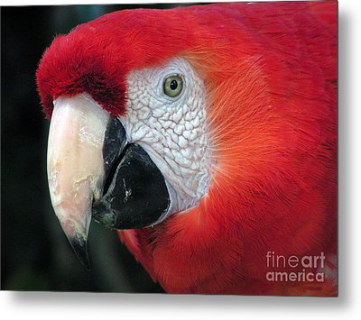 Metal Print featuring the photograph Face Of Scarlet Macaw by Alexandra Jordankova