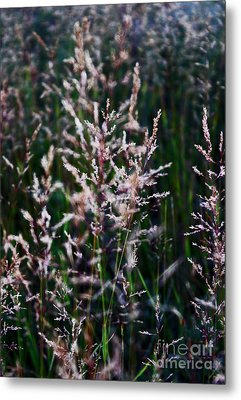Faces In The Field Grass Metal Print by Wesley Hahn