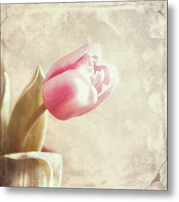 Faded By The Light Metal Print by Cathie Tyler