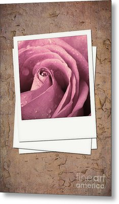 Faded Rose Photo Metal Print by Jane Rix