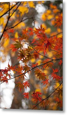 Fall Color Montage Metal Print by Mike Reid