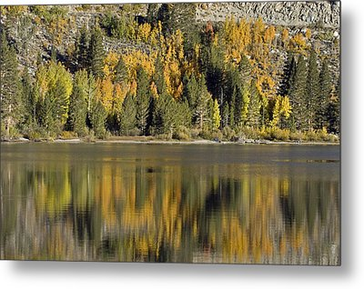 Fall Color Reflection And Tree Metal Print by Rich Reid