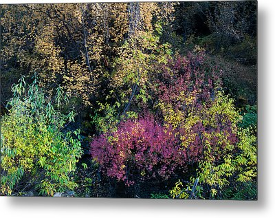 Metal Print featuring the photograph Fall Colors Alaska by Gary Rose