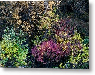 Fall Colors Alaska Metal Print by Gary Rose