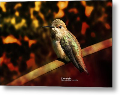 Fall Colors - Allens Hummingbird Metal Print by James Ahn
