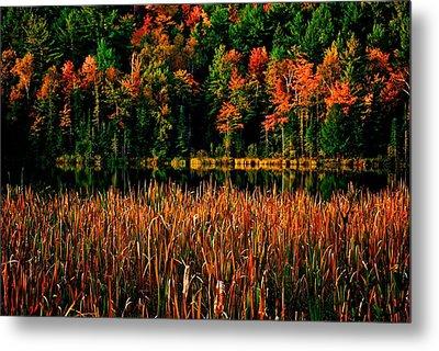 Fall Colors Metal Print by Andre Faubert