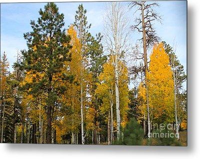 Fall Colors Aspen Metal Print by Pamela Walrath