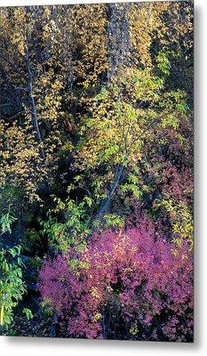 Fall Colors Metal Print by Gary Rose
