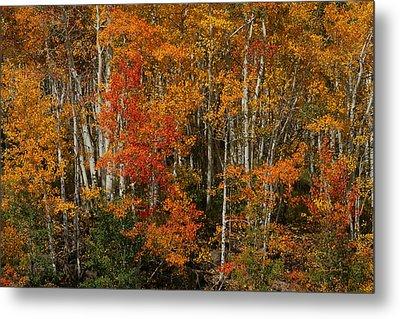 Fall Colors Grand Mesa Metal Print by Ernie Echols