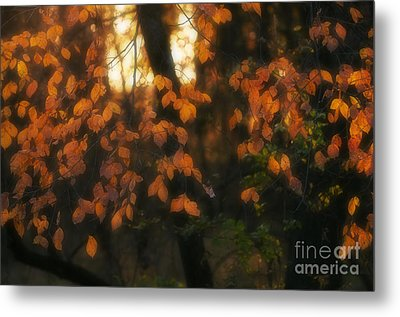 Fall Colours Metal Print by Art Whitton