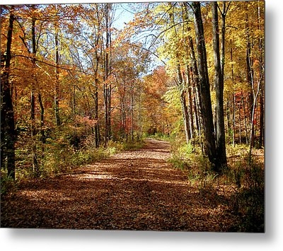 Metal Print featuring the photograph Fall Coming On by Paul Mashburn