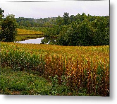 Fall Corn In Virginia Countryside Metal Print by Richard Singleton
