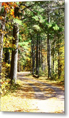 Metal Print featuring the photograph Fall Day To Remember by Paula Brown