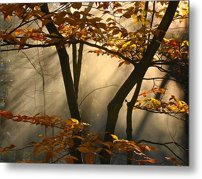 Fall Fantasy Metal Print by Claire Crocker