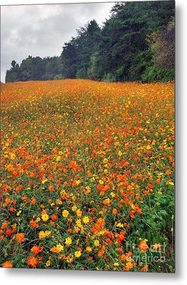 Metal Print featuring the photograph Fall Flowers by Janice Spivey