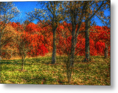 Fall Foliage Metal Print by Ronald T Williams
