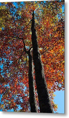 Fall From Above Metal Print by David Patterson