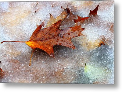 Metal Print featuring the photograph Fall Frost by Patrice Zinck