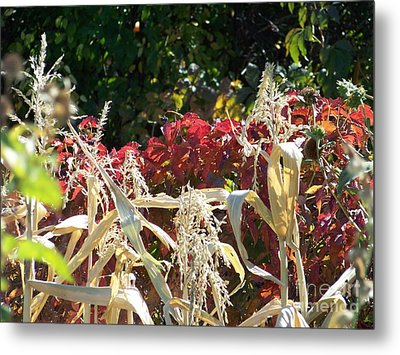 Fall Harvest Of Color Metal Print
