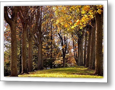 Metal Print featuring the photograph fall in Folsom by Rima Biswas