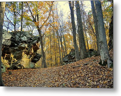 Fall In The Forest 3 Metal Print by Marty Koch