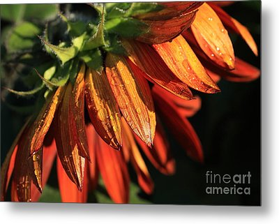 Fall Is On Its Way Metal Print by Marjorie Imbeau