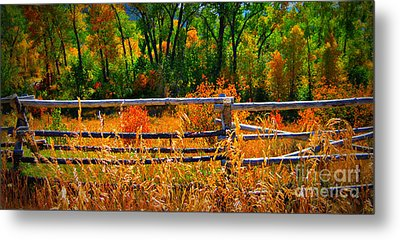 Metal Print featuring the photograph Fall  by Janice Westerberg
