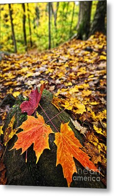 Fall Leaves In Forest Metal Print