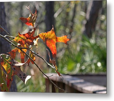 Metal Print featuring the photograph Fall by Lou Belcher