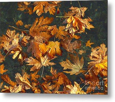Fall Maple Leaves On Water Metal Print