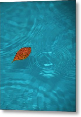 Fall... Metal Print by Mario Celzner