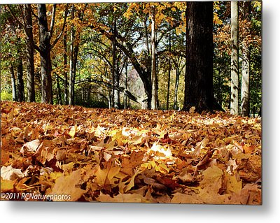 Metal Print featuring the photograph Fall On The Ground by Rachel Cohen
